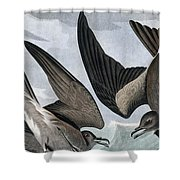 Fork Tailed Petrel, Thalassidroma Leachii By Audubon Shower Curtain