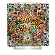 Forms Of Nature #1 Shower Curtain