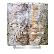 Foster Trees 4 Shower Curtain