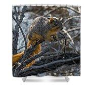 Fox Squirrel - 8988 Shower Curtain