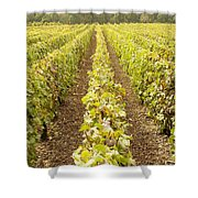 French Vineyards Of The Champagne Region Shower Curtain