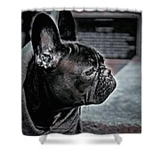 Frenchie Shower Curtain by Susan Maxwell Schmidt