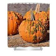 Fresh Butternut Pumpkins Shower Curtain