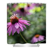 Frilly Hat Echinacea Shower Curtain