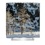 Frost Covered Trees On The Portage Glacier Highway Alaska Shower Curtain