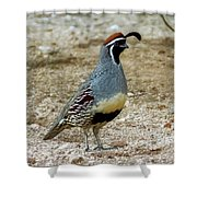 Gambel's Quail H1812 Shower Curtain by Mark Myhaver