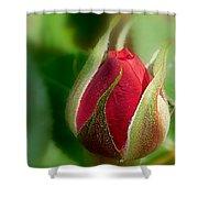Garden Series - I V Shower Curtain
