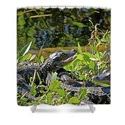 Gator Brood Shower Curtain