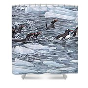 Gentoo Penguins By Alan M Hunt Shower Curtain