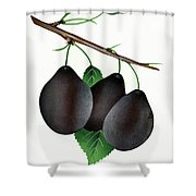 German Prunes Fruit Vintage Art Shower Curtain