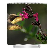 Glowing Wings Of A Hummingbird Shower Curtain