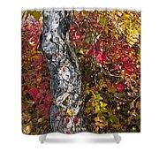 Gnarled Tree Trunk - Dezadeash Lake - Yukon Territory  Shower Curtain