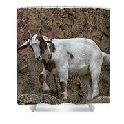 Goat Print 9245 Shower Curtain