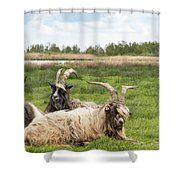 Goats  Shower Curtain by Anjo Ten Kate