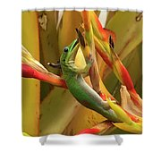 Gold Dust Gecko  Shower Curtain