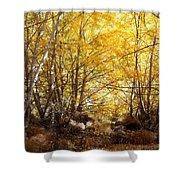 Golden Autumn Light Shower Curtain