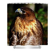 Golden Eagle Portrait Shower Curtain