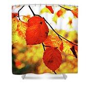 Golden Leaf Shower Curtain
