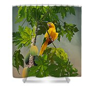 Golden Parakeet In Papaya Tree Shower Curtain