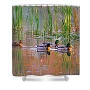 Got My Ducks In A Row Shower Curtain