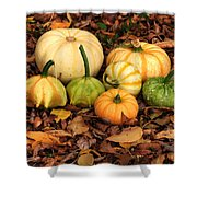 Gourds Grounded Shower Curtain