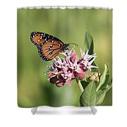 Grafton Queen Shower Curtain