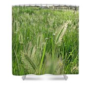 Grass Seeds The  Paddock Shower Curtain