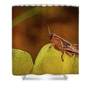 Grasshopper 4600 Shower Curtain
