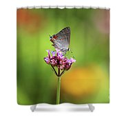 Gray Hairstreak Butterfly In Summer Shower Curtain