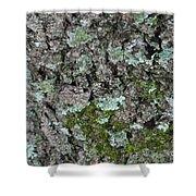 Gray Treefrog - 8522-2 Shower Curtain