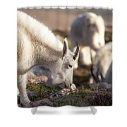Grazing On Mount Evans Shower Curtain