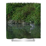 Great Blue Heron - 5922 Shower Curtain