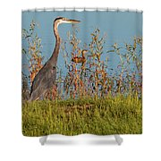 Great Blue Heron Looking For Food Shower Curtain