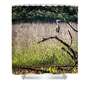 Great Blue Heron On A Snag Shower Curtain