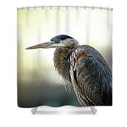 Great Blue Heron Portrait Shower Curtain