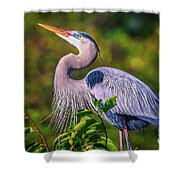 Great Blue In Mating Plumage Shower Curtain by Tom Claud