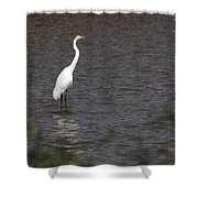 Great Egret 3211 Shower Curtain