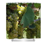 Green Grapes On The Vine 10 Shower Curtain