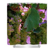 Green Grapes On The Vine 12 Shower Curtain