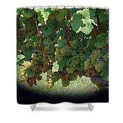 Green Grapes On The Vine 16 Shower Curtain