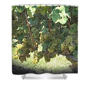 Green Grapes On The Vine 17 Shower Curtain