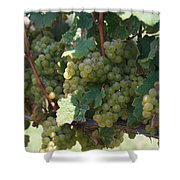 Green Grapes On The Vine 18 Shower Curtain
