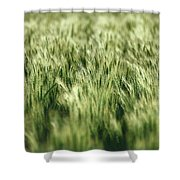 Green Growing Wheat Shower Curtain