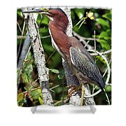 Green Heron In The Glades Shower Curtain