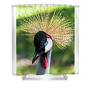 Grey Crowned Crane Gulf Shores Al Collage 2 Triptych Shower Curtain