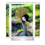 Grey Crowned Crane Gulf Shores Al Collage 6 Triptych Shower Curtain
