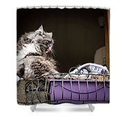 Grey Long Haired Cat Sitting On A Window Sill Shower Curtain