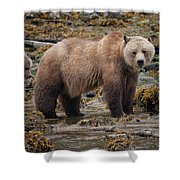 Grizzlies Shower Curtain by Randy Hall