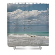 Group Of Pelicans Above The Ocean Shower Curtain