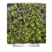 Grove Of Pines Aerial Shower Curtain